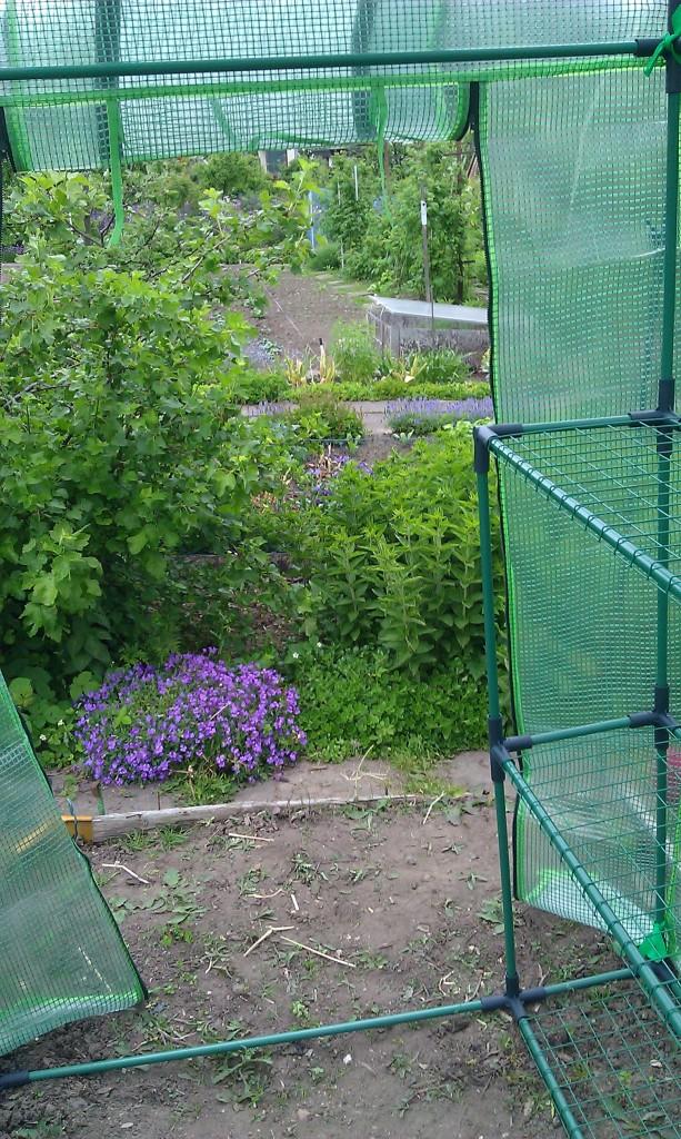 Blick aus dem Tomatenhaus heraus