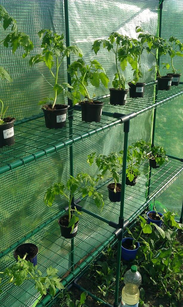 Tomatenhausbewohner